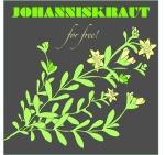Johanniskraut1